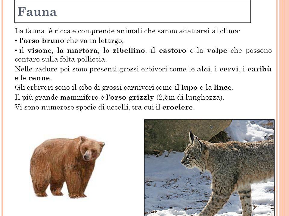 99 Fauna. La fauna è ricca e comprende animali che sanno adattarsi al clima: l orso bruno che va in letargo,