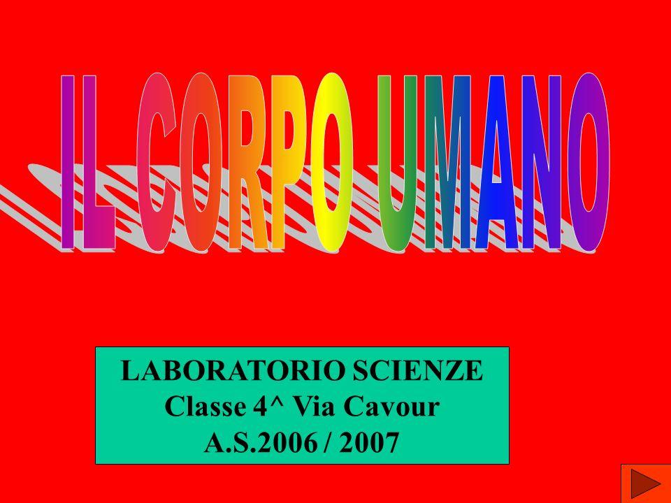 IL CORPO UMANO LABORATORIO SCIENZE Classe 4^ Via Cavour A.S.2006 / 2007