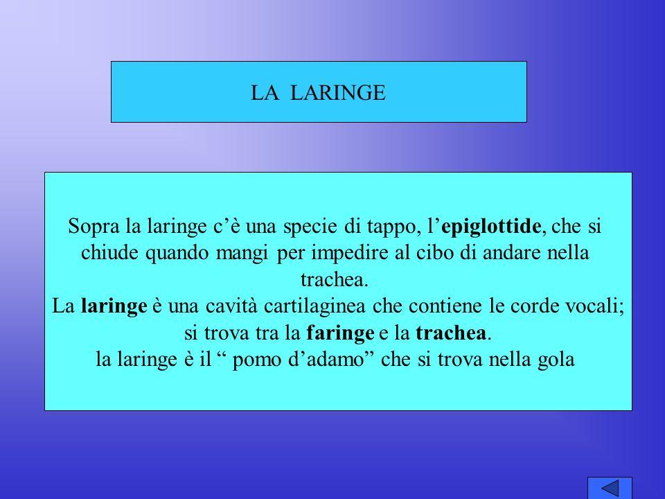 Sopra la laringe c'è una specie di tappo, l'epiglottide, che si