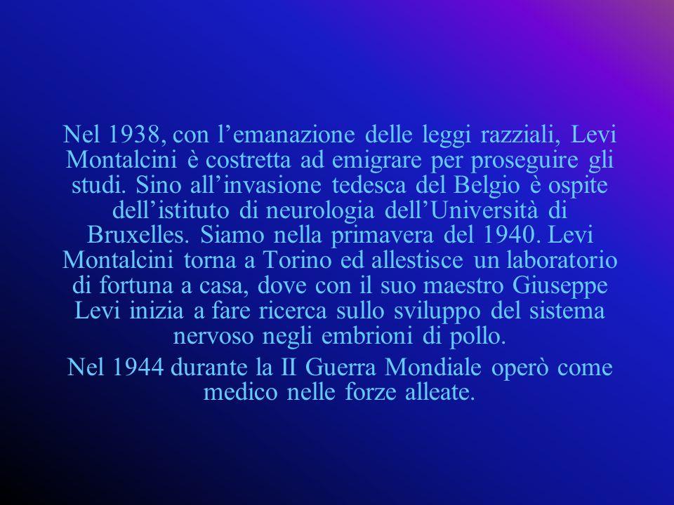 Nel 1938, con l'emanazione delle leggi razziali, Levi Montalcini è costretta ad emigrare per proseguire gli studi. Sino all'invasione tedesca del Belgio è ospite dell'istituto di neurologia dell'Università di Bruxelles. Siamo nella primavera del 1940. Levi Montalcini torna a Torino ed allestisce un laboratorio di fortuna a casa, dove con il suo maestro Giuseppe Levi inizia a fare ricerca sullo sviluppo del sistema nervoso negli embrioni di pollo.