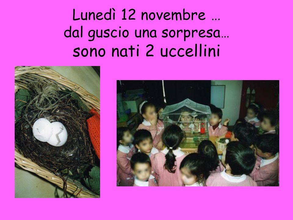 Lunedì 12 novembre … dal guscio una sorpresa… sono nati 2 uccellini