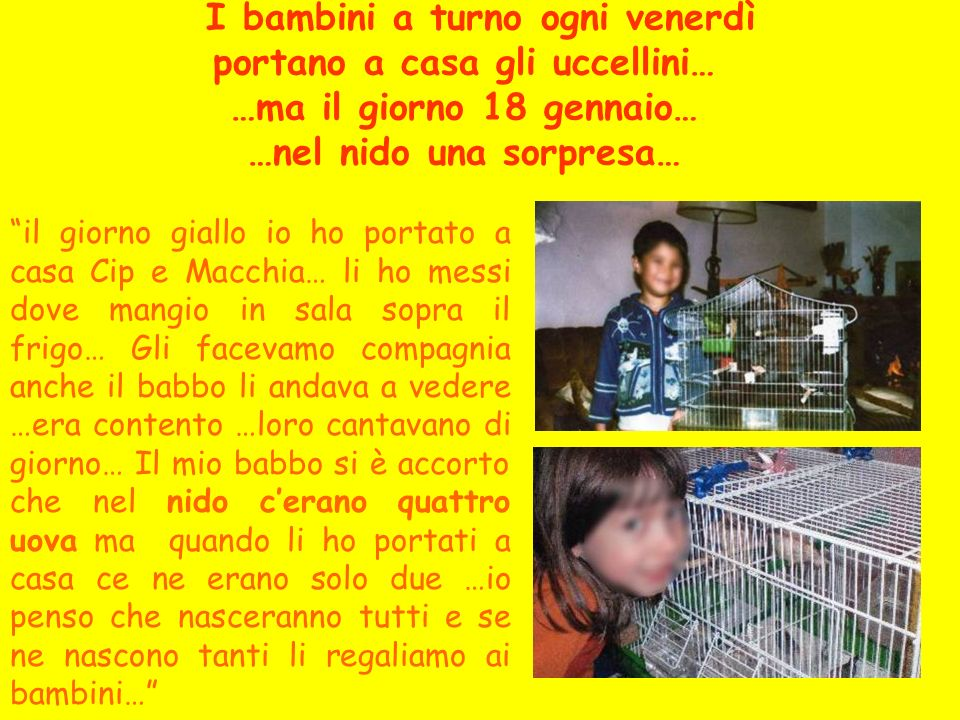 I bambini a turno ogni venerdì portano a casa gli uccellini… …ma il giorno 18 gennaio… …nel nido una sorpresa…