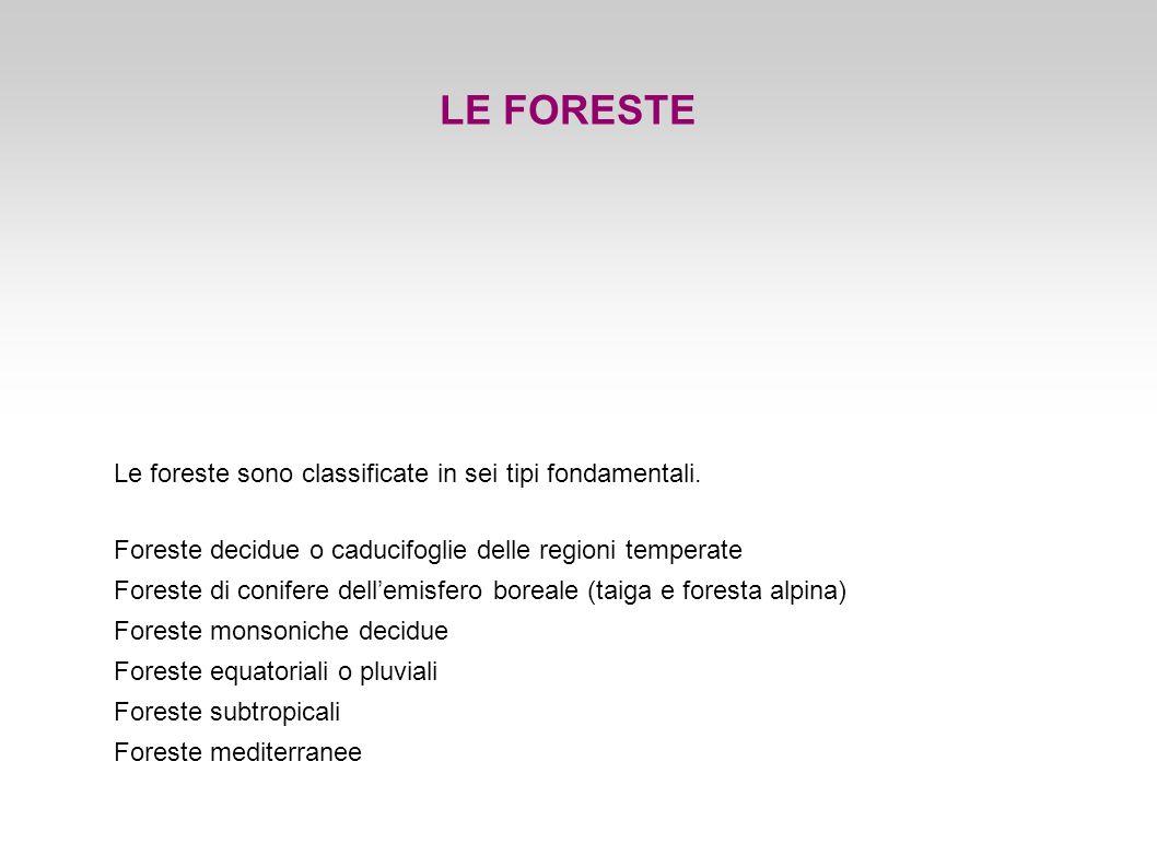 LE FORESTE Le foreste sono classificate in sei tipi fondamentali.