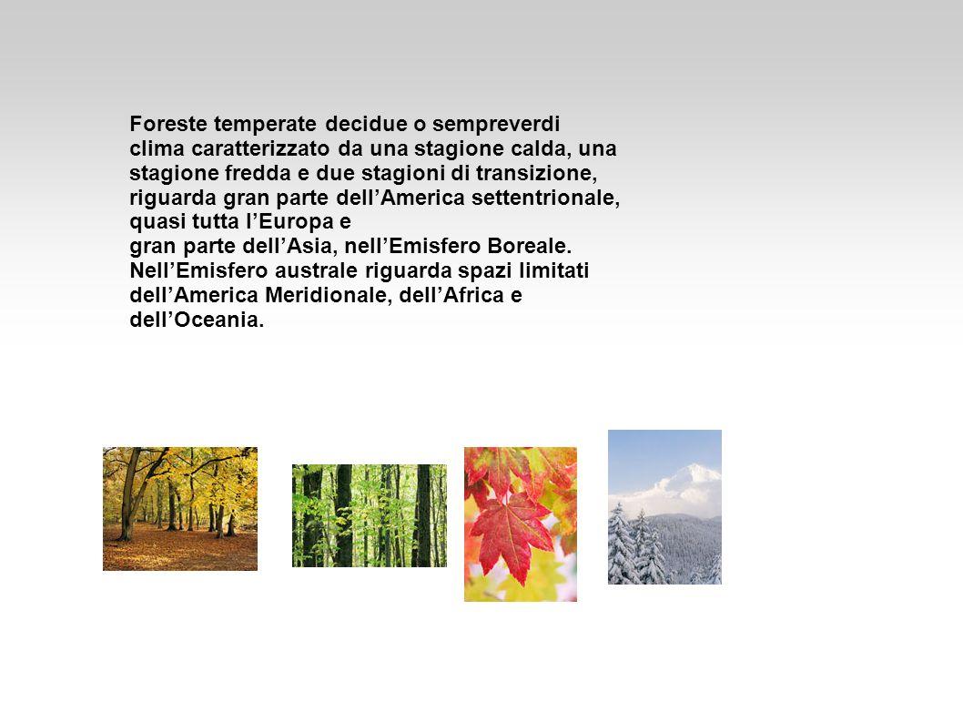 Foreste temperate decidue o sempreverdi