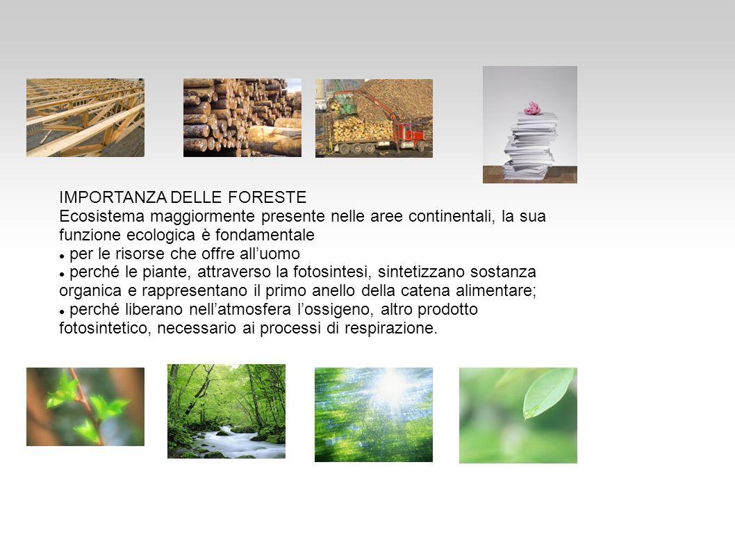 IMPORTANZA DELLE FORESTE