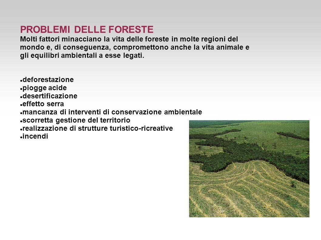 PROBLEMI DELLE FORESTE