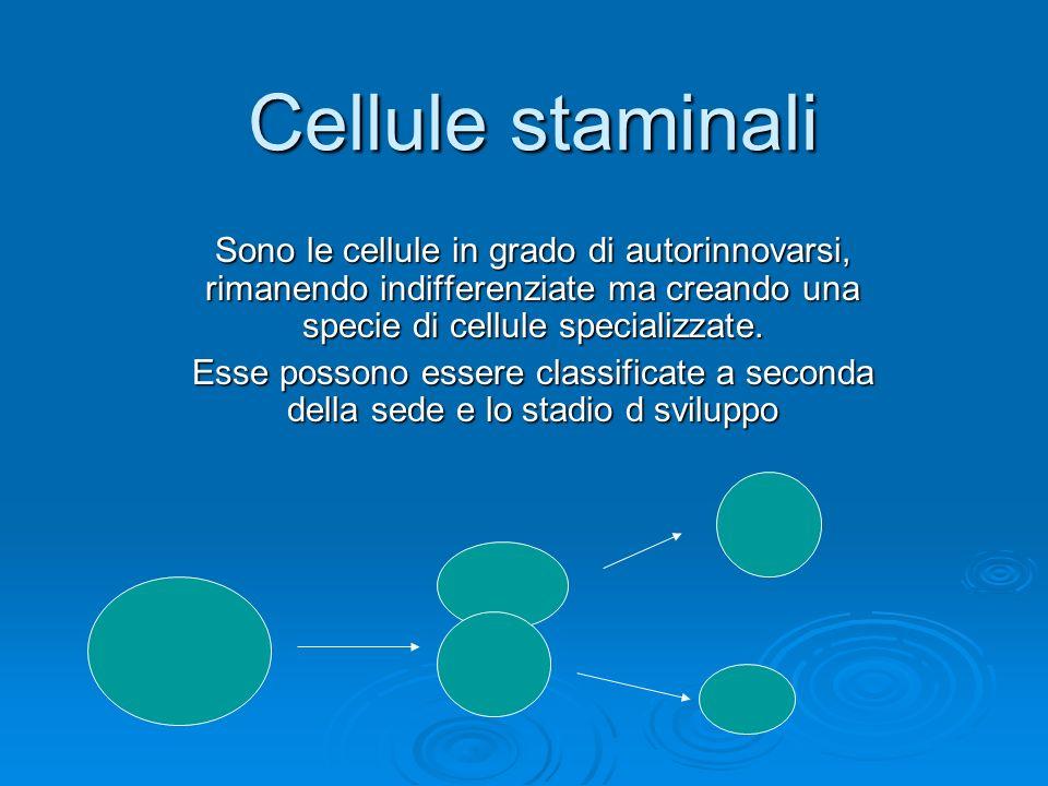 Cellule staminali Sono le cellule in grado di autorinnovarsi, rimanendo indifferenziate ma creando una specie di cellule specializzate.