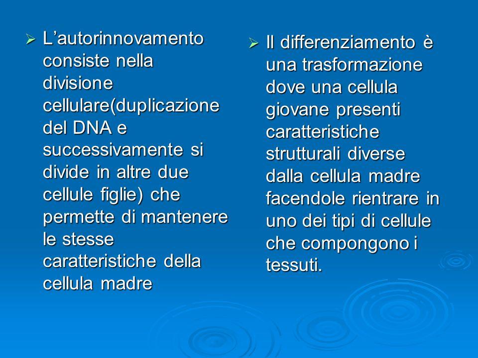 L'autorinnovamento consiste nella divisione cellulare(duplicazione del DNA e successivamente si divide in altre due cellule figlie) che permette di mantenere le stesse caratteristiche della cellula madre
