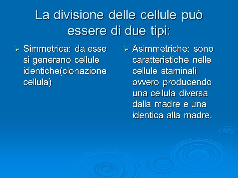 La divisione delle cellule può essere di due tipi: