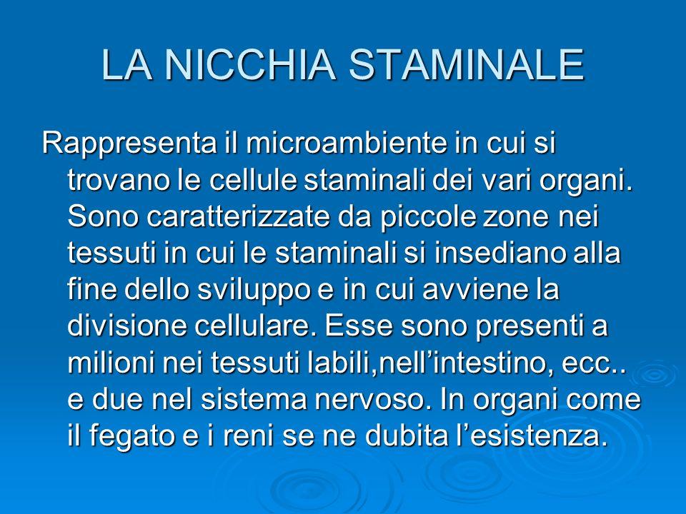 LA NICCHIA STAMINALE