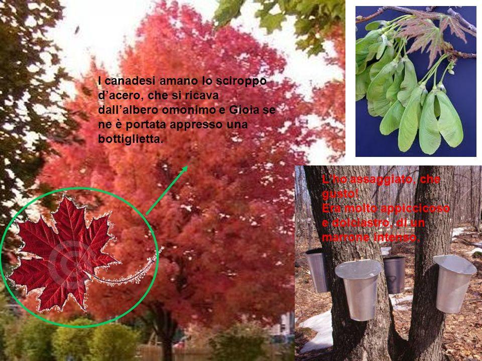 I canadesi amano lo sciroppo d'acero, che si ricava dall'albero omonimo e Gioia se ne è portata appresso una bottiglietta.