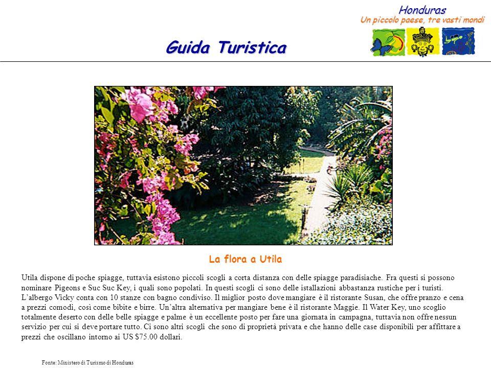 La flora a Utila