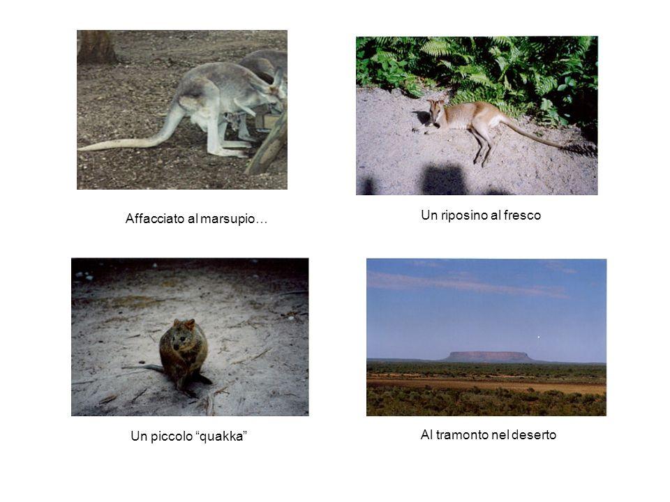 Affacciato al marsupio…