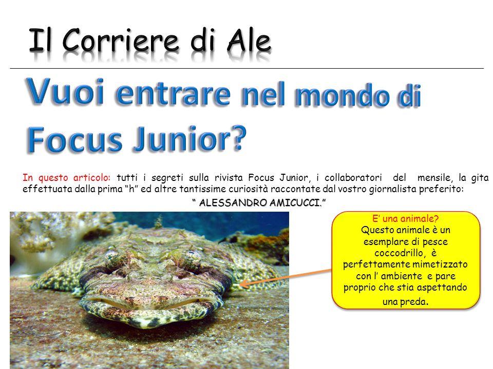 Vuoi entrare nel mondo di Focus Junior