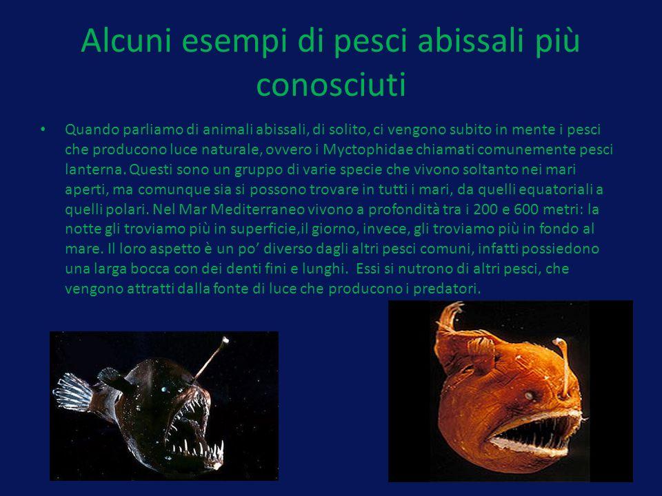 Alcuni esempi di pesci abissali più conosciuti