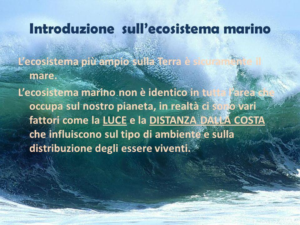 Introduzione sull'ecosistema marino