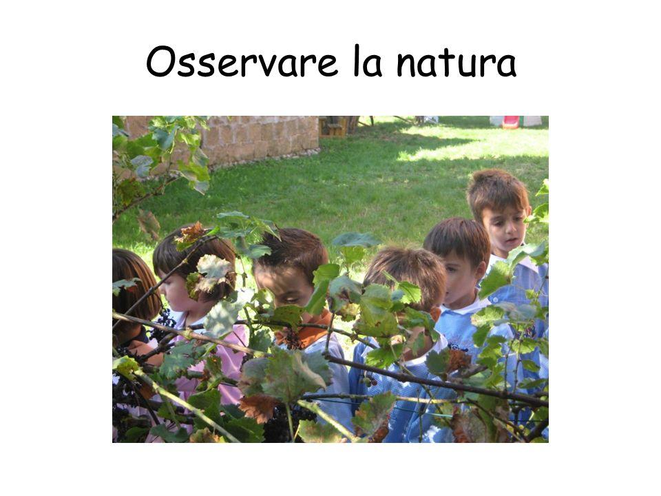 Osservare la natura