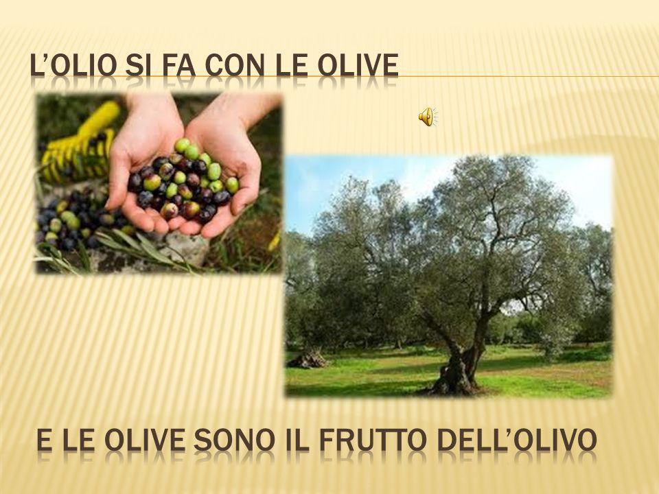 L'olio si fa con le olive