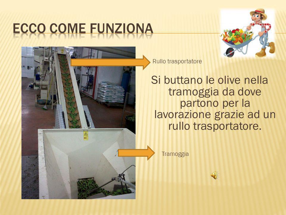 Ecco come funziona Rullo trasportatore. Si buttano le olive nella tramoggia da dove partono per la lavorazione grazie ad un rullo trasportatore.