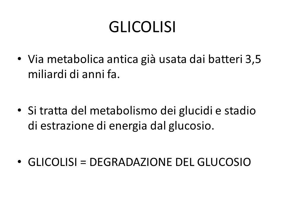 GLICOLISI Via metabolica antica già usata dai batteri 3,5 miliardi di anni fa.