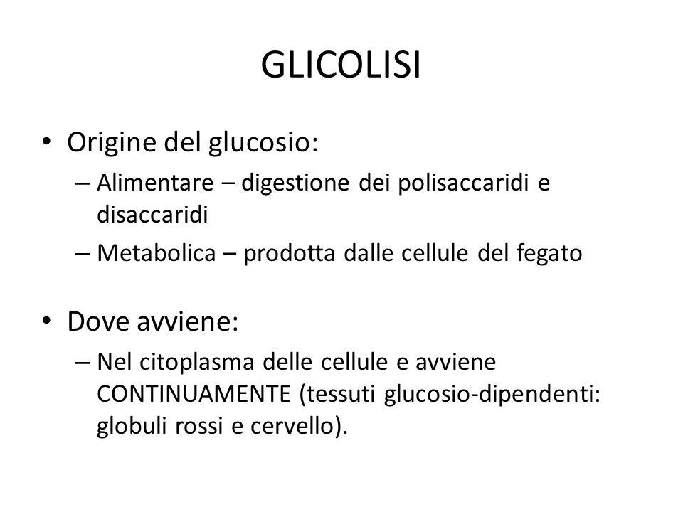 GLICOLISI Origine del glucosio: Dove avviene: