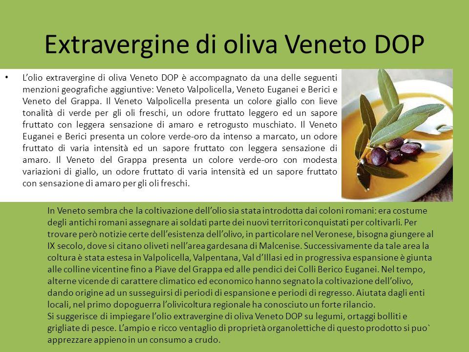 Extravergine di oliva Veneto DOP
