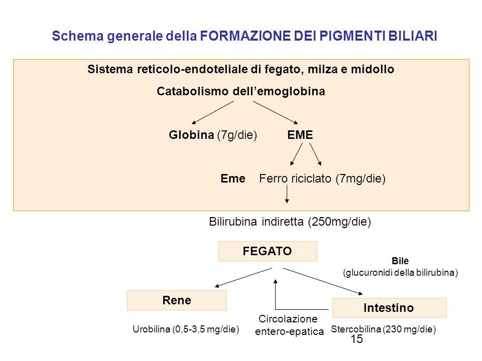 Schema generale della FORMAZIONE DEI PIGMENTI BILIARI