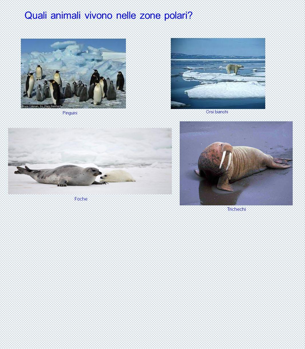 Quali animali vivono nelle zone polari