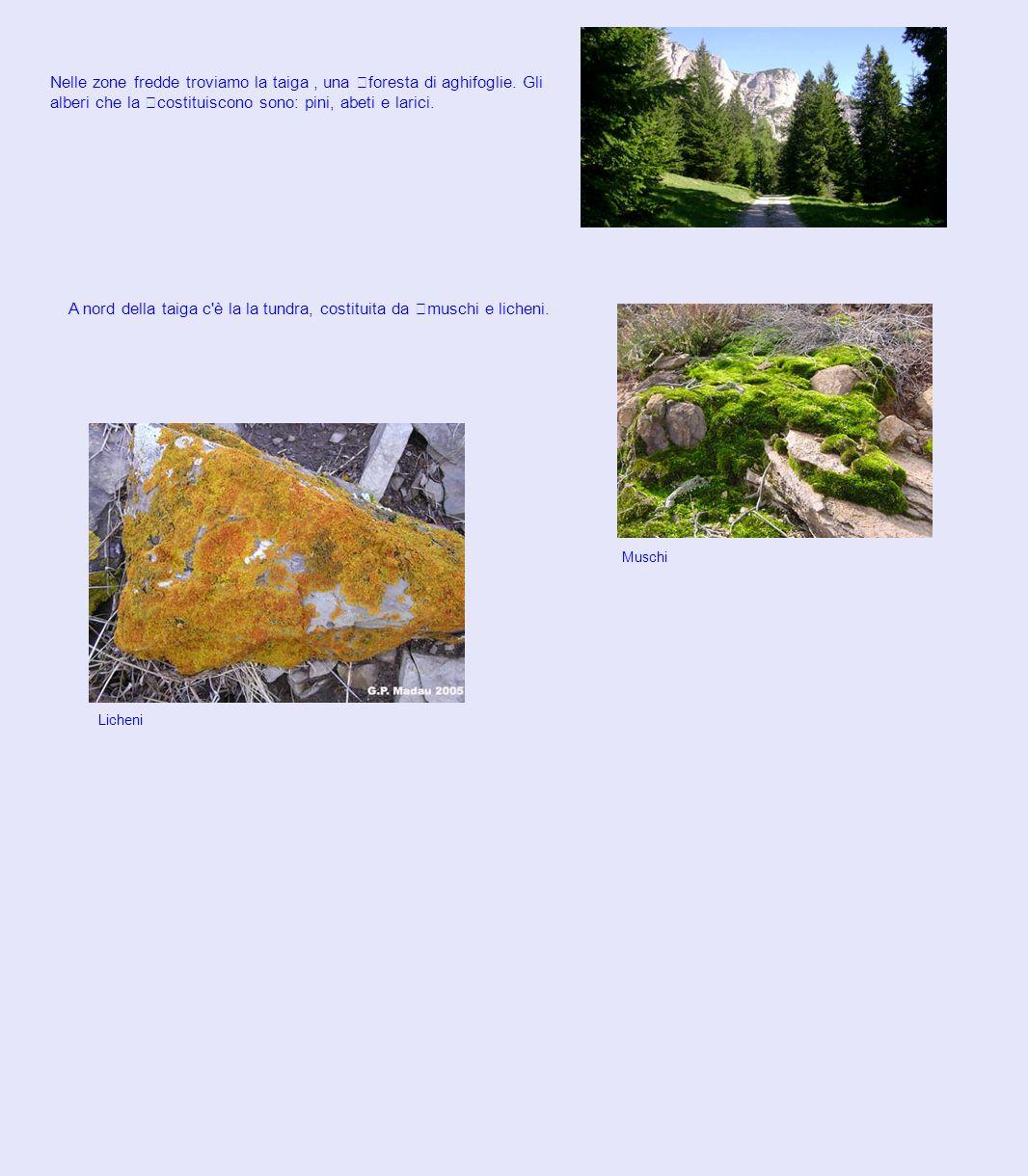 A nord della taiga c è la la tundra, costituita da muschi e licheni.