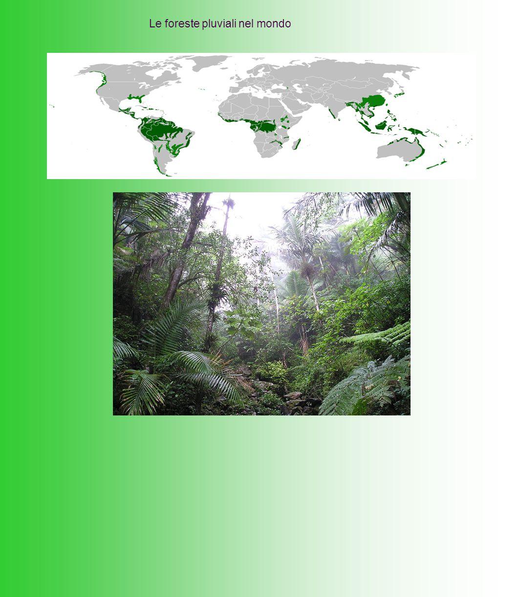 Le foreste pluviali nel mondo