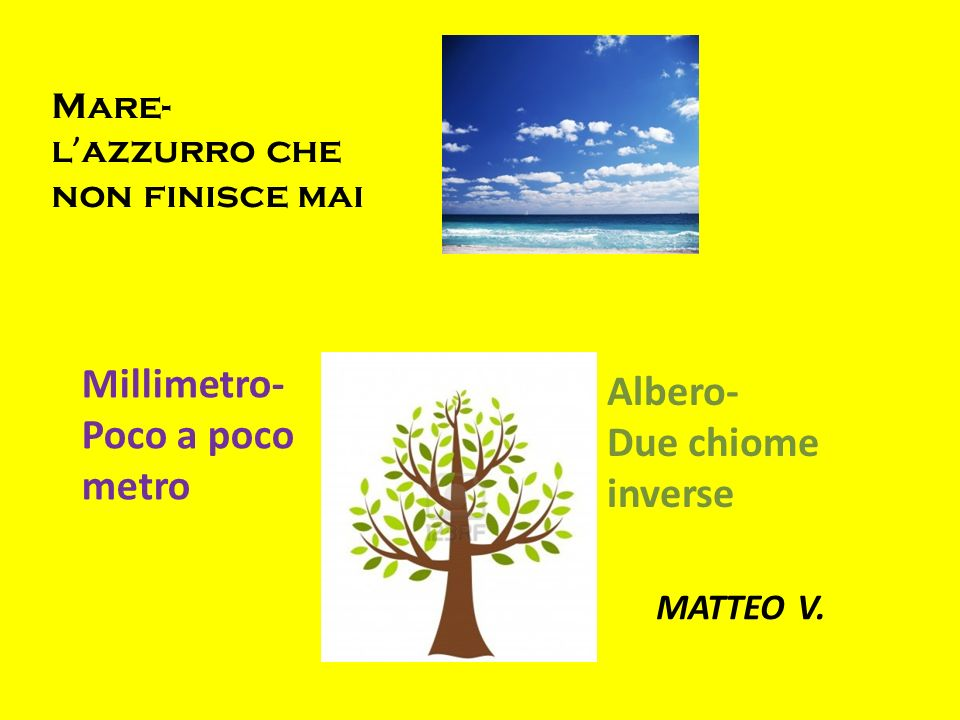 Millimetro- Albero- Poco a poco Due chiome metro inverse Mare-