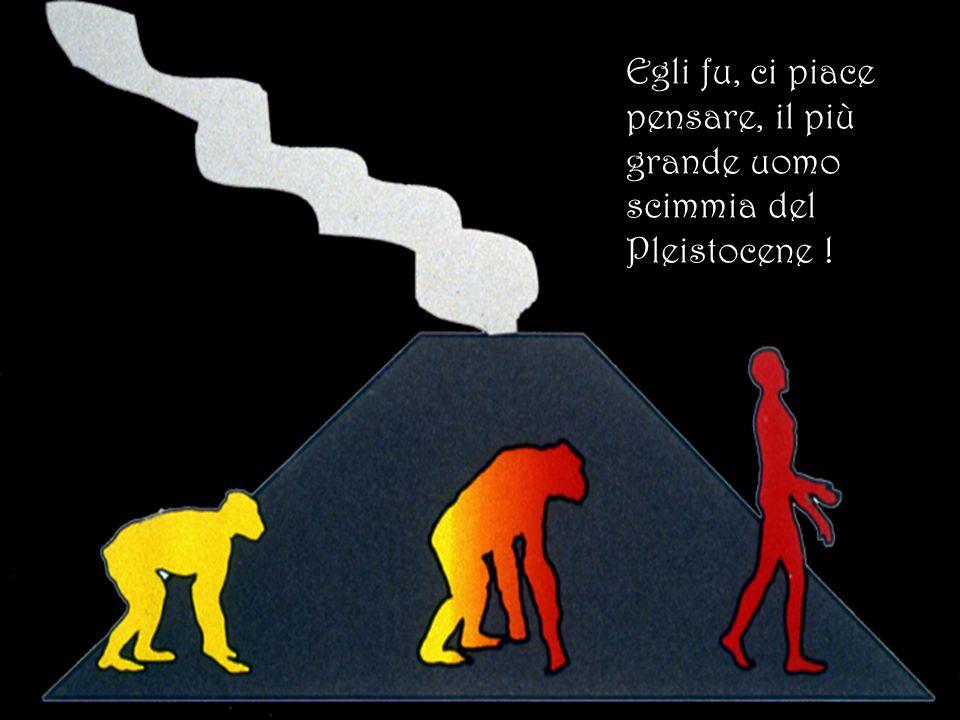 Egli fu, ci piace pensare, il più grande uomo scimmia del Pleistocene !