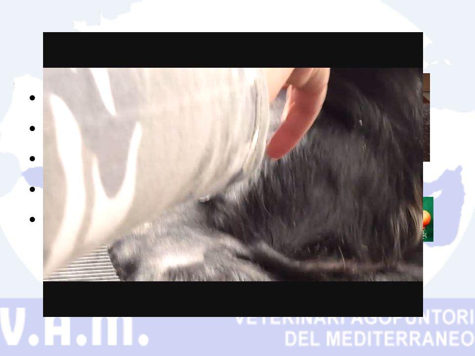 Campo veterinario Grosso limite il pelo Fuoco Ventose con pompetta