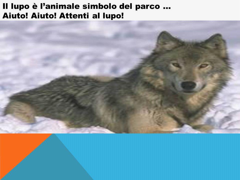 Il lupo è l'animale simbolo del parco …