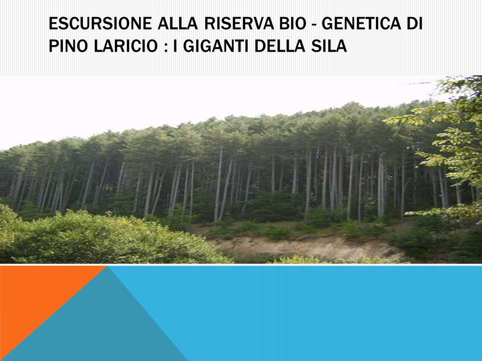 Escursione alla riserva bio - genetica di pino laricio : I giganti della sila