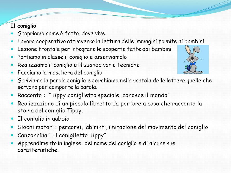 Racconto : Tippy coniglietto speciale, conosce il mondo