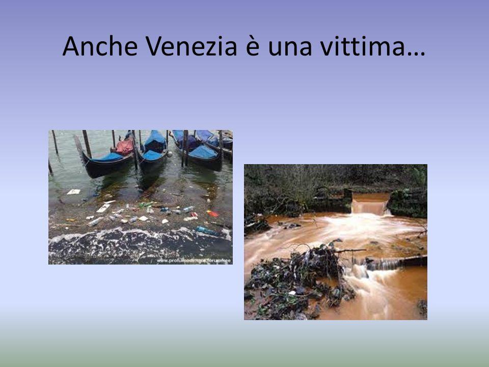 Anche Venezia è una vittima…