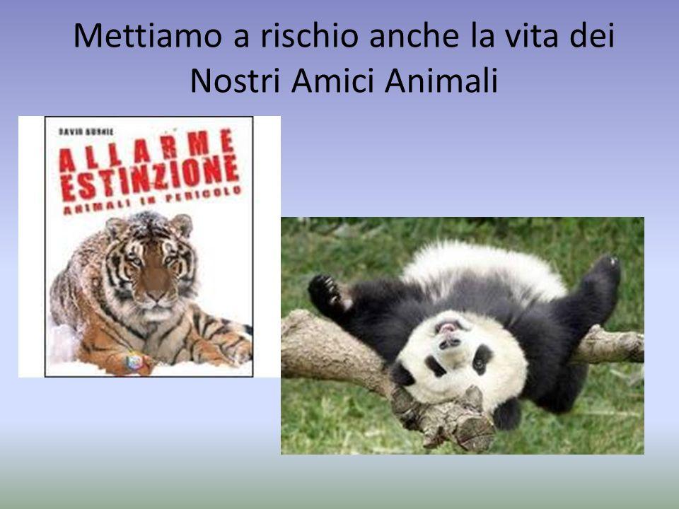 Mettiamo a rischio anche la vita dei Nostri Amici Animali