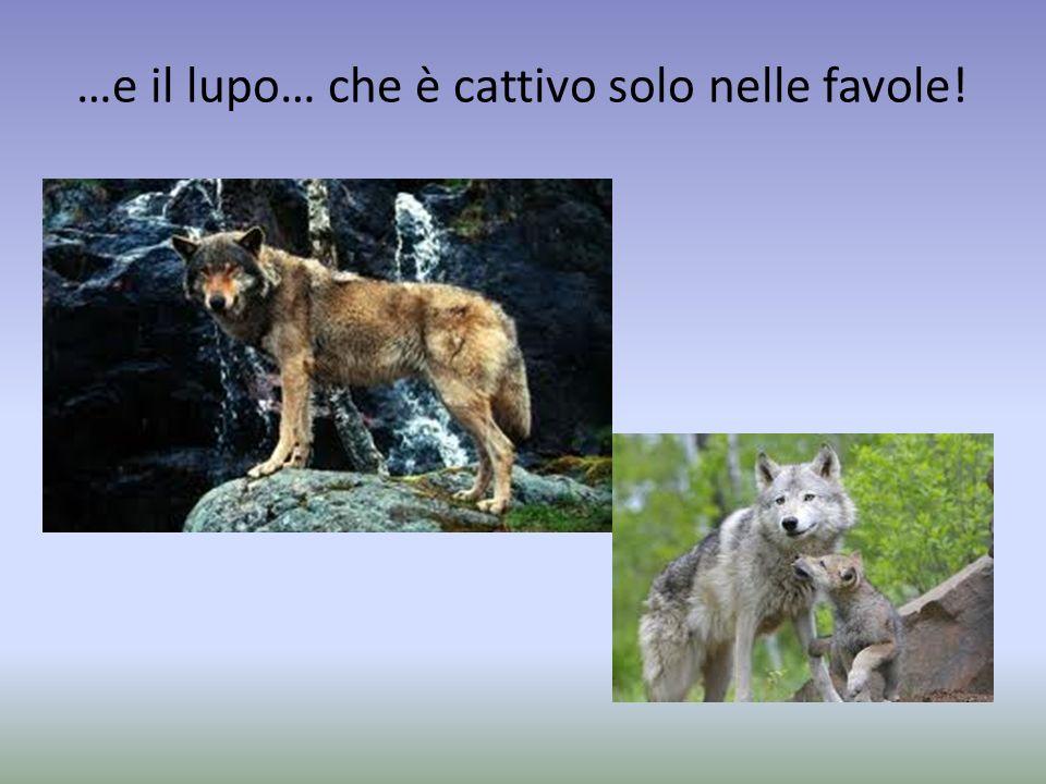 …e il lupo… che è cattivo solo nelle favole!