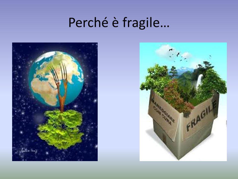 Perché è fragile…