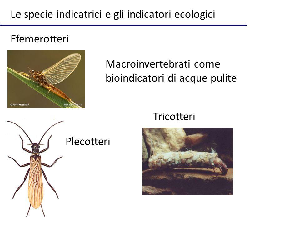 Le specie indicatrici e gli indicatori ecologici