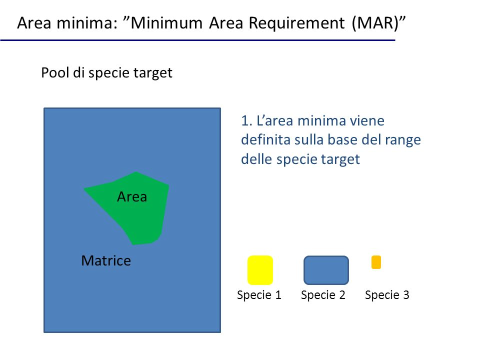 Area minima: Minimum Area Requirement (MAR)