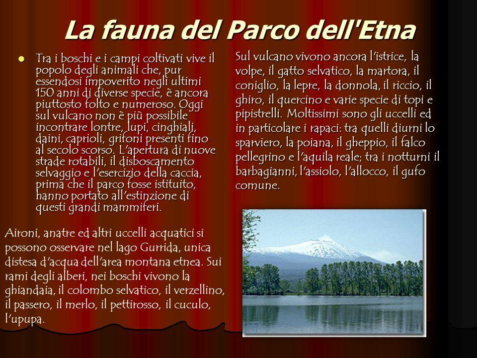 La fauna del Parco dell Etna