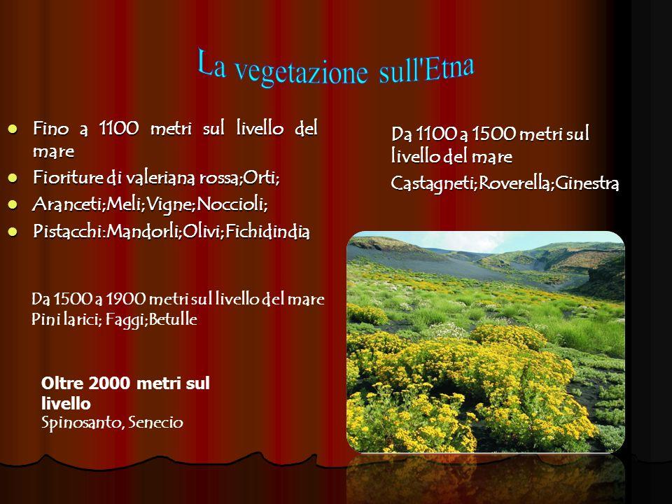 La vegetazione sull Etna