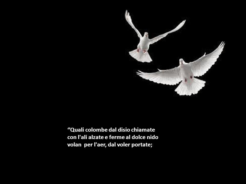 ''Quali colombe dal disio chiamate con l ali alzate e ferme al dolce nido volan per l aer, dal voler portate;