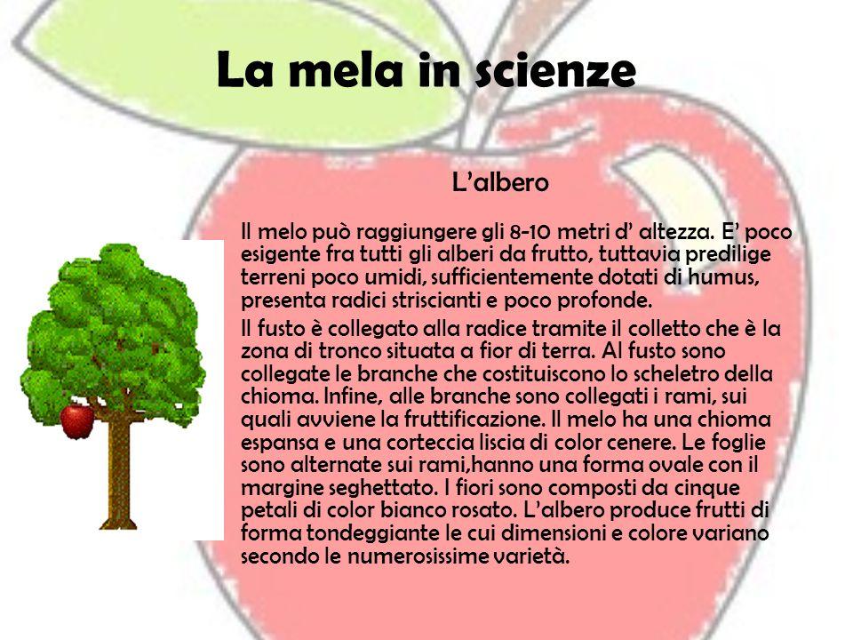 La mela in scienze L'albero