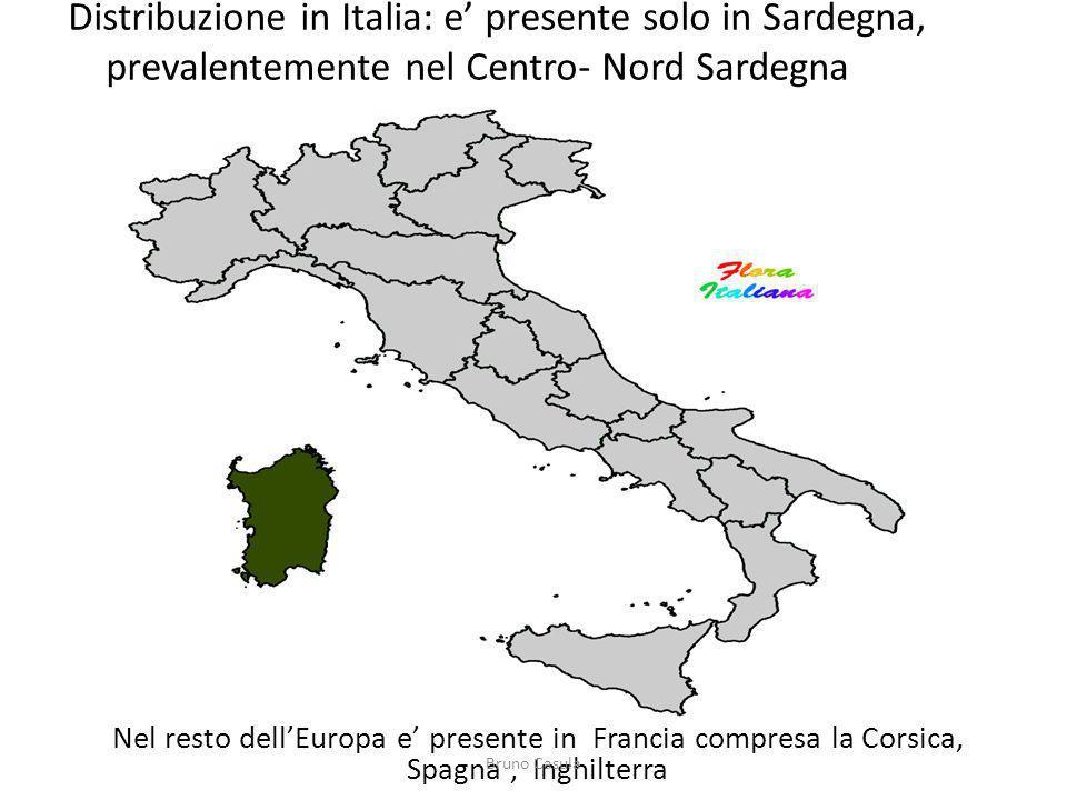 Distribuzione in Italia: e' presente solo in Sardegna, prevalentemente nel Centro- Nord Sardegna
