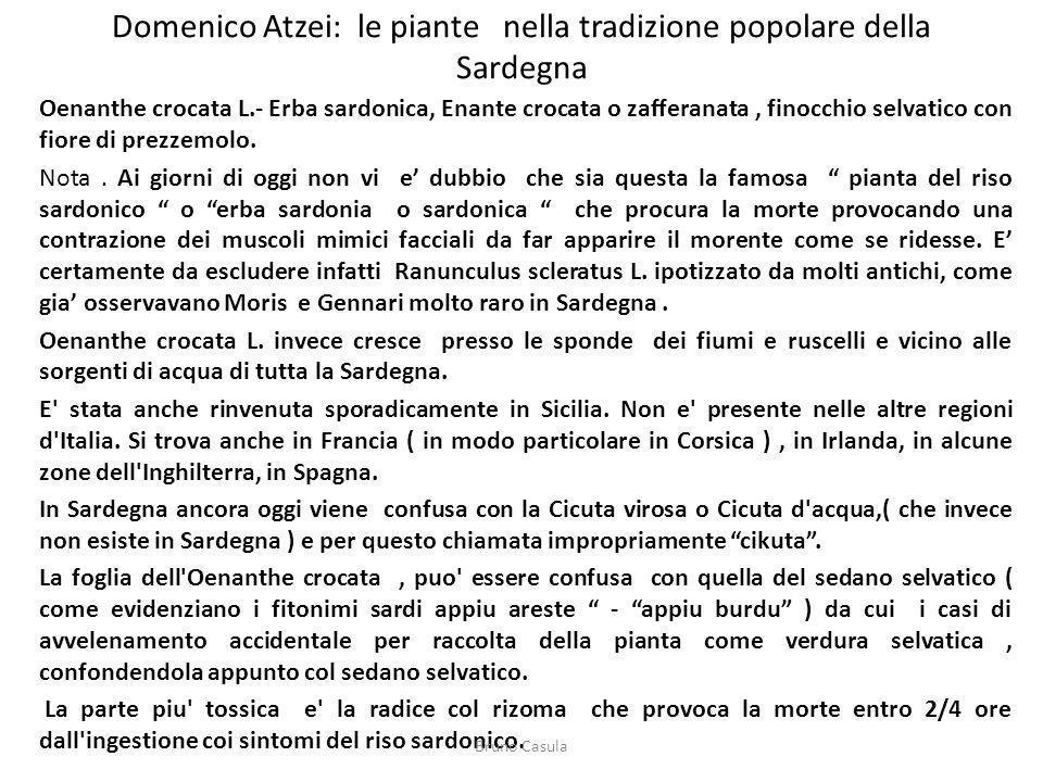 Domenico Atzei: le piante nella tradizione popolare della Sardegna
