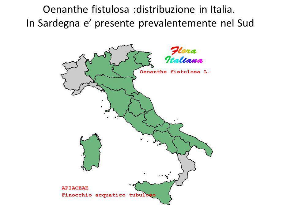 Oenanthe fistulosa :distribuzione in Italia
