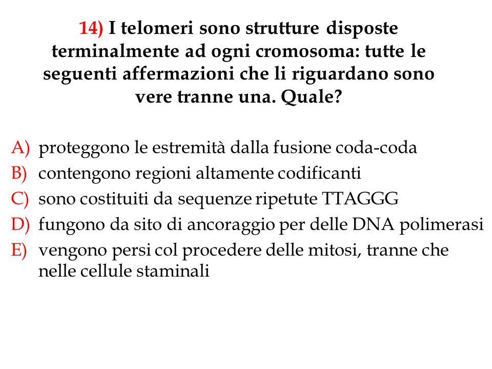 14) I telomeri sono strutture disposte terminalmente ad ogni cromosoma: tutte le seguenti affermazioni che li riguardano sono vere tranne una. Quale